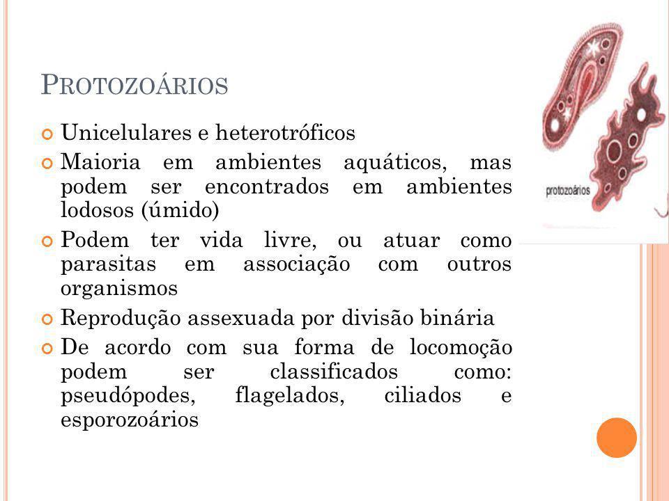 P ROTOZOÁRIOS Unicelulares e heterotróficos Maioria em ambientes aquáticos, mas podem ser encontrados em ambientes lodosos (úmido) Podem ter vida livre, ou atuar como parasitas em associação com outros organismos Reprodução assexuada por divisão binária De acordo com sua forma de locomoção podem ser classificados como: pseudópodes, flagelados, ciliados e esporozoários