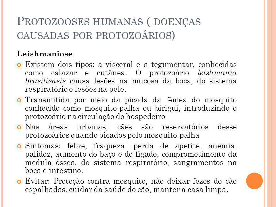 P ROTOZOOSES HUMANAS ( DOENÇAS CAUSADAS POR PROTOZOÁRIOS ) Leishmaniose Existem dois tipos: a visceral e a tegumentar, conhecidas como calazar e cutânea.