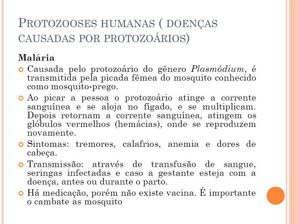 P ROTOZOOSES HUMANAS ( DOENÇAS CAUSADAS POR PROTOZOÁRIOS ) Malária Causada pelo protozoário do gênero Plasmódium, é transmitida pela picada fêmea do mosquito conhecido como mosquito-prego.