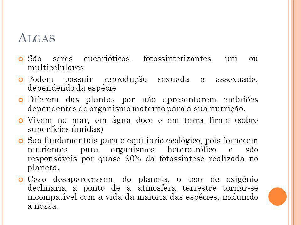 P ROTOZOÁRIOS Esporozoários – Não possuem estruturas locomotoras, seu deslocamento só ocorre se houver algum tipo de correnteza no local.