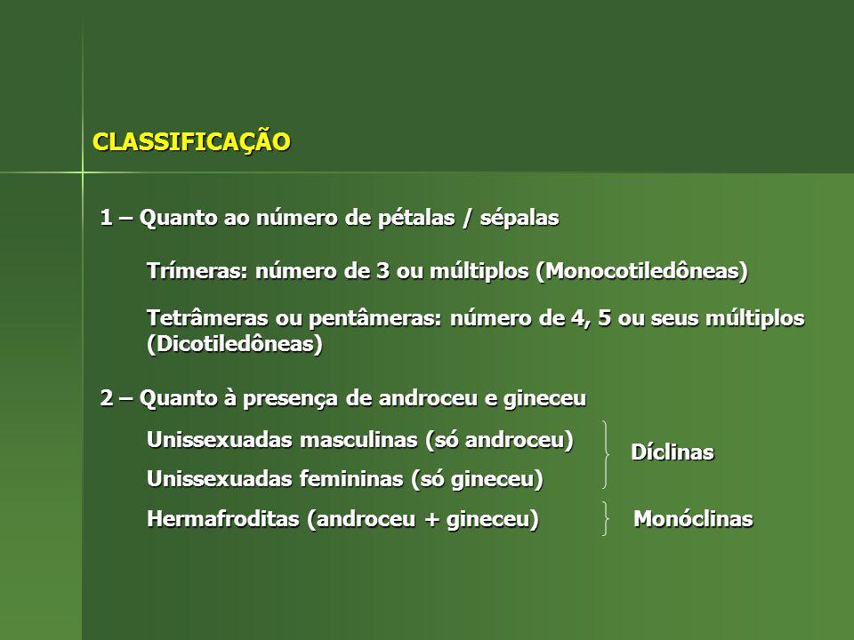 CLASSIFICAÇÃO 1 – Quanto ao número de pétalas / sépalas Trímeras: número de 3 ou múltiplos (Monocotiledôneas) Tetrâmeras ou pentâmeras: número de 4, 5 ou seus múltiplos (Dicotiledôneas) 2 – Quanto à presença de androceu e gineceu Unissexuadas masculinas (só androceu) Unissexuadas femininas (só gineceu) Hermafroditas (androceu + gineceu) Díclinas Monóclinas