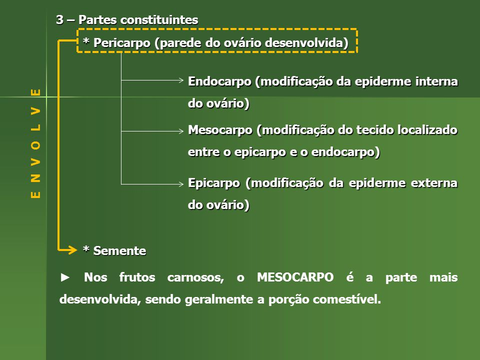 3 – Partes constituintes * Pericarpo (parede do ovário desenvolvida) Endocarpo (modificação da epiderme interna do ovário) Mesocarpo (modificação do tecido localizado entre o epicarpo e o endocarpo) Epicarpo (modificação da epiderme externa do ovário) * Semente Nos frutos carnosos, o MESOCARPO é a parte mais desenvolvida, sendo geralmente a porção comestível.