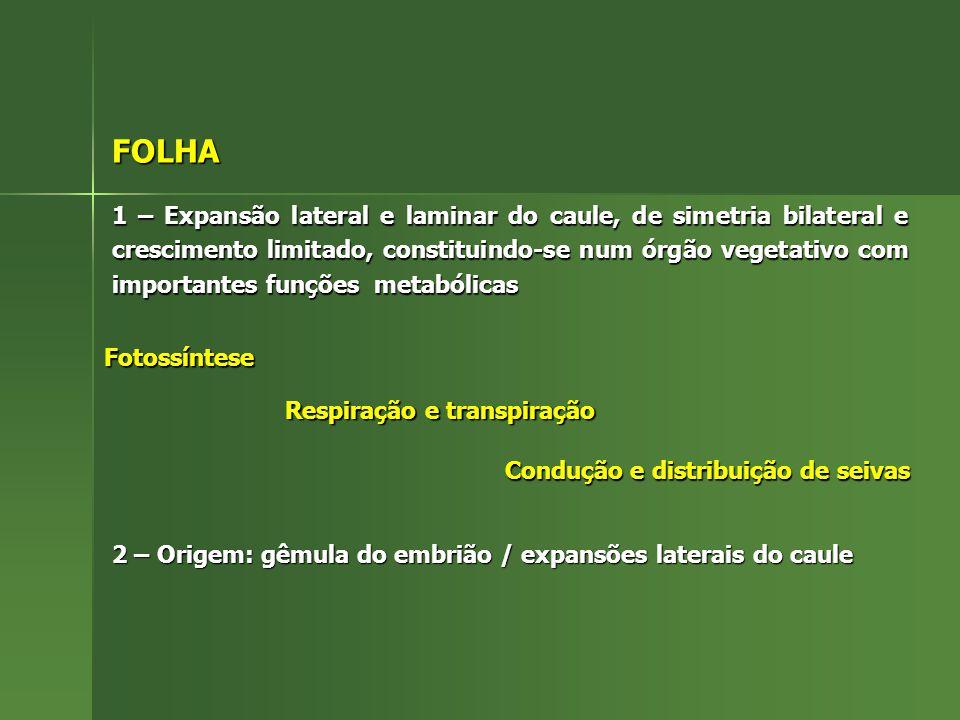 FOLHA 1 – Expansão lateral e laminar do caule, de simetria bilateral e crescimento limitado, constituindo-se num órgão vegetativo com importantes funç