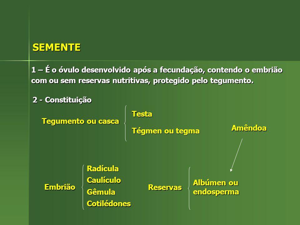 SEMENTE 1 – É o óvulo desenvolvido após a fecundação, contendo o embrião com ou sem reservas nutritivas, protegido pelo tegumento. 2 - Constituição Te