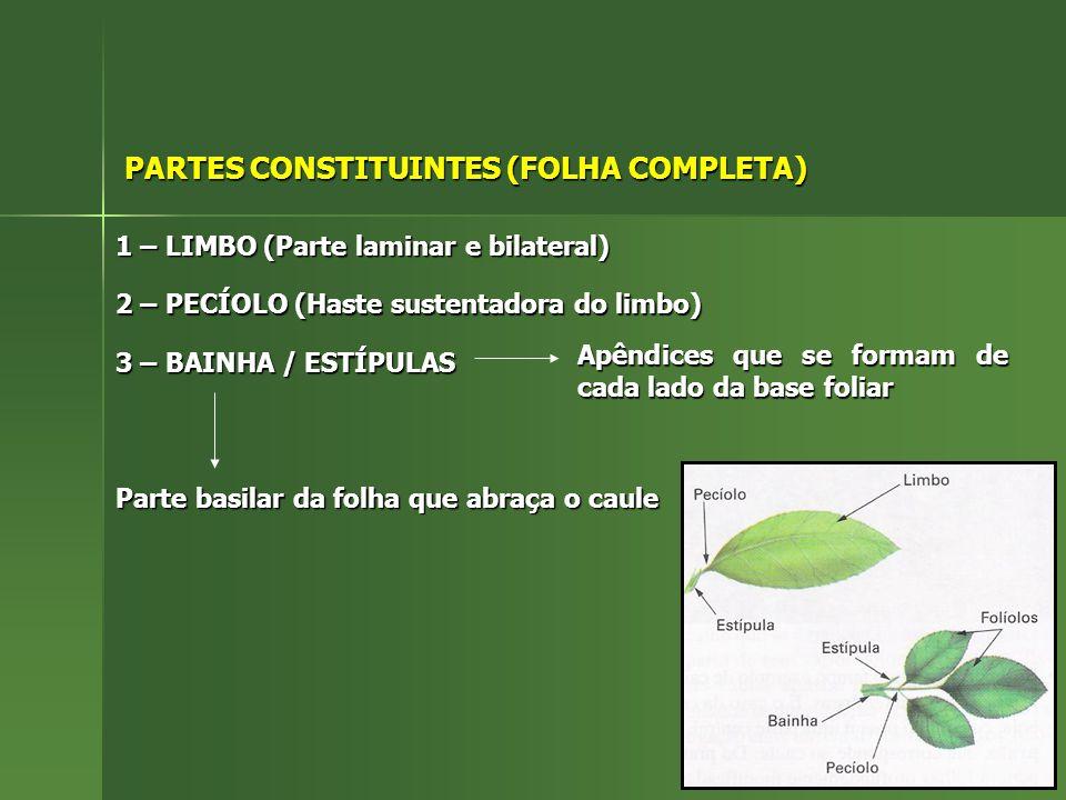 PARTES CONSTITUINTES (FOLHA COMPLETA) 1 – LIMBO (Parte laminar e bilateral) 2 – PECÍOLO (Haste sustentadora do limbo) 3 – BAINHA / ESTÍPULAS Parte basilar da folha que abraça o caule Apêndices que se formam de cada lado da base foliar