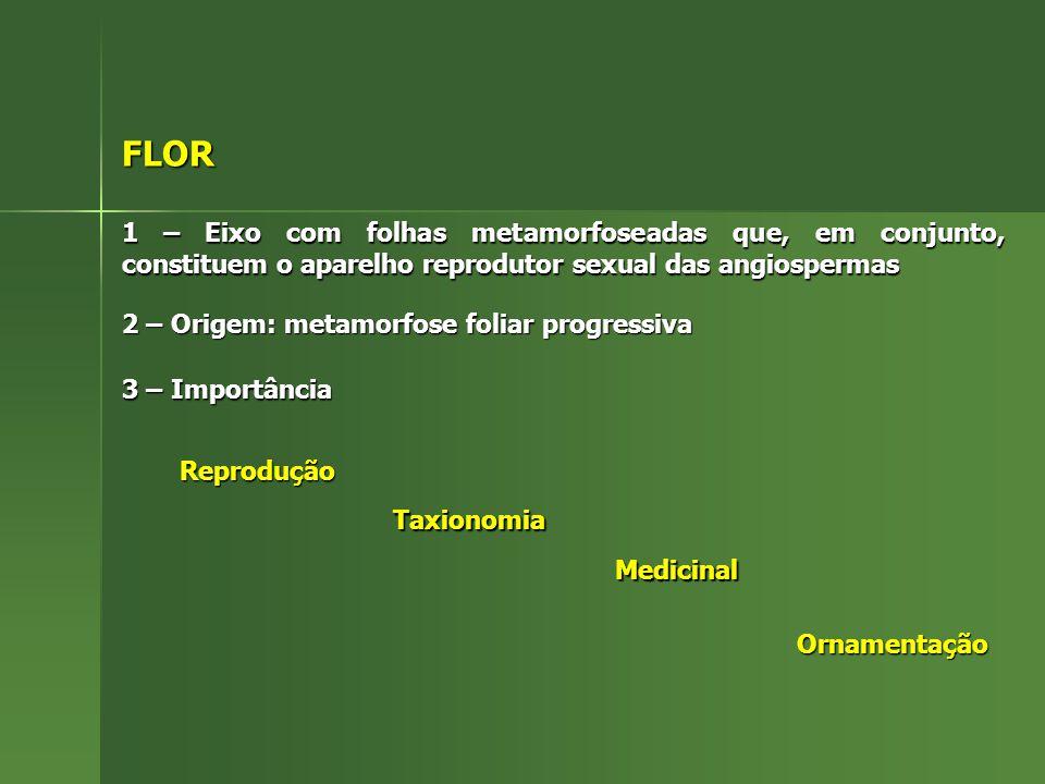 FLOR 1 – Eixo com folhas metamorfoseadas que, em conjunto, constituem o aparelho reprodutor sexual das angiospermas 2 – Origem: metamorfose foliar pro