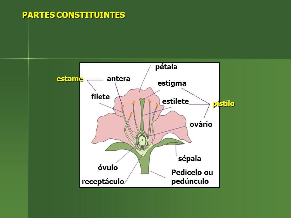 PARTES CONSTITUINTES PARTES CONSTITUINTES antera filete estame estigma estilete ovário pistilo óvulo receptáculo Pedicelo ou pedúnculo sépala pétala