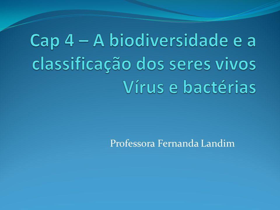 Bactérias São classificadas quanto a sua forma: Coco: arredondada Bacilo: bastão Espirilos: espiral Vibrião: vírgula