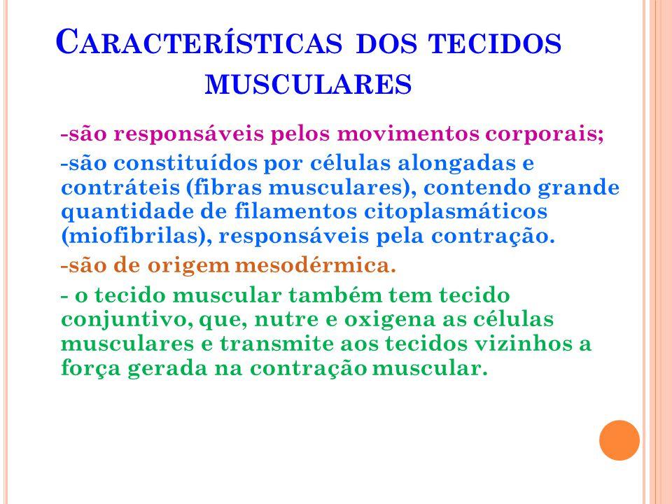 O TECIDO MUSCULAR PODE SER DE TRÊS TIPOS : Tecido muscular liso Tecido muscular estriado esquelético Tecido muscular estriado cardíaco