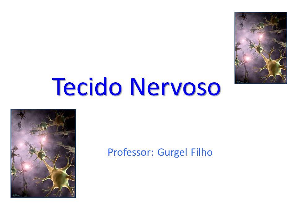 Tecido Nervoso Professor: Gurgel Filho