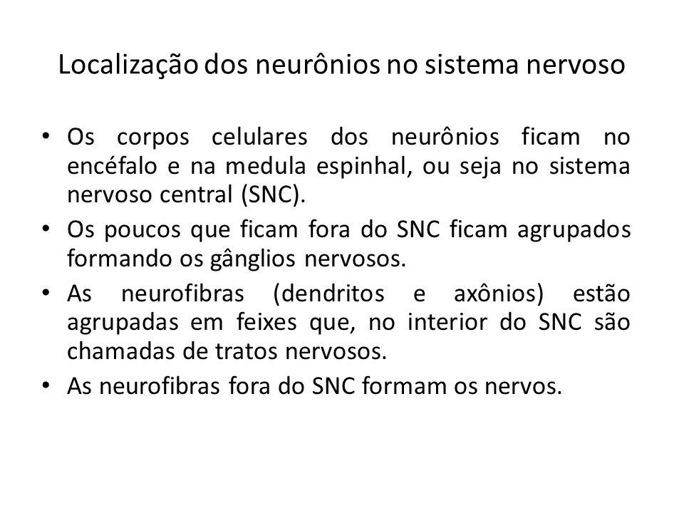Localização dos neurônios no sistema nervoso Os corpos celulares dos neurônios ficam no encéfalo e na medula espinhal, ou seja no sistema nervoso cent