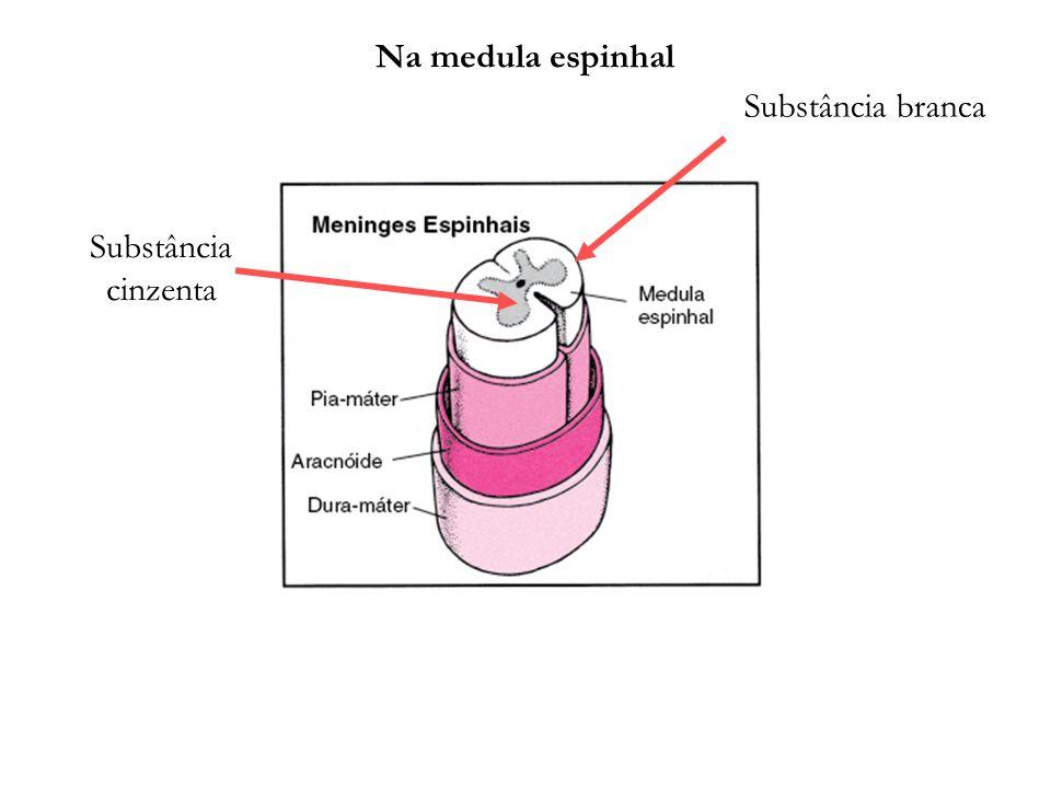 Substância cinzenta Substância branca Na medula espinhal