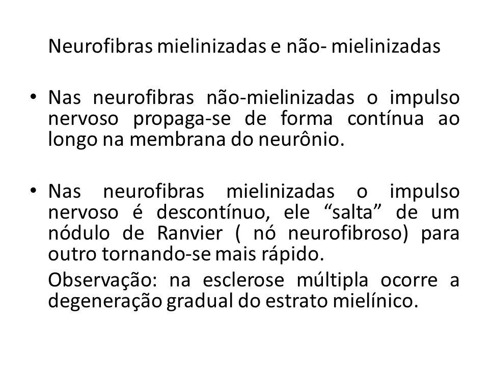 Neurofibras mielinizadas e não- mielinizadas Nas neurofibras não-mielinizadas o impulso nervoso propaga-se de forma contínua ao longo na membrana do n