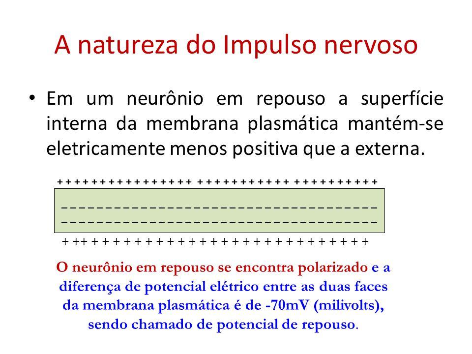 A natureza do Impulso nervoso Em um neurônio em repouso a superfície interna da membrana plasmática mantém-se eletricamente menos positiva que a exter