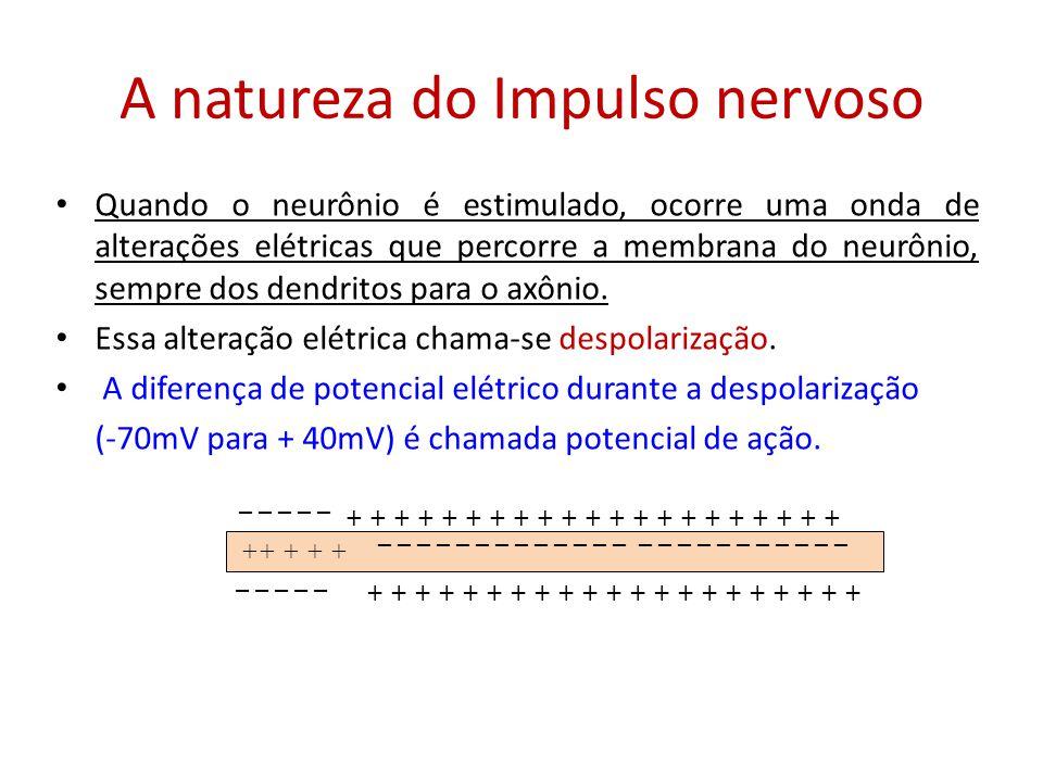 A natureza do Impulso nervoso Quando o neurônio é estimulado, ocorre uma onda de alterações elétricas que percorre a membrana do neurônio, sempre dos