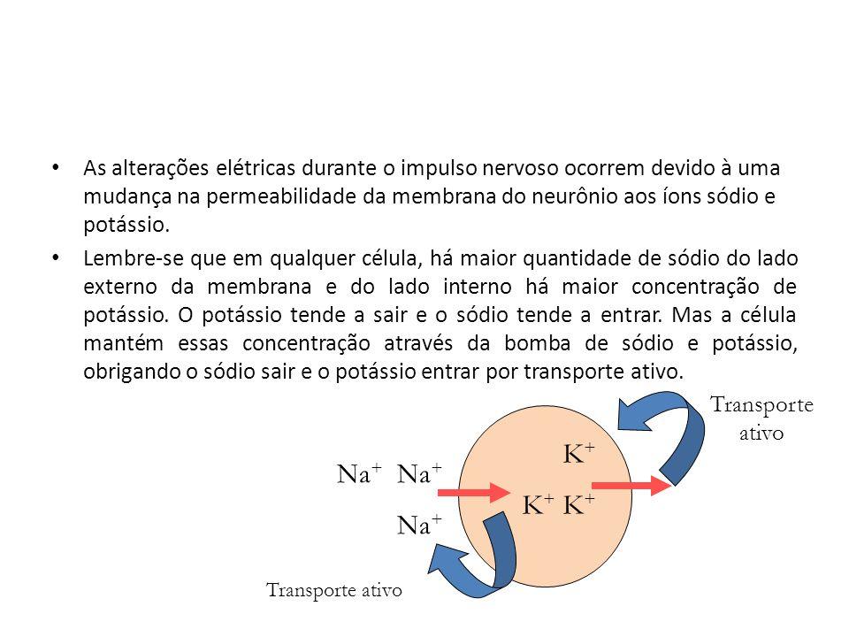 As alterações elétricas durante o impulso nervoso ocorrem devido à uma mudança na permeabilidade da membrana do neurônio aos íons sódio e potássio. Le