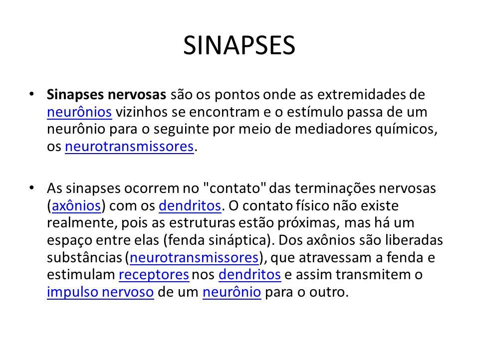 SINAPSES Sinapses nervosas são os pontos onde as extremidades de neurônios vizinhos se encontram e o estímulo passa de um neurônio para o seguinte por