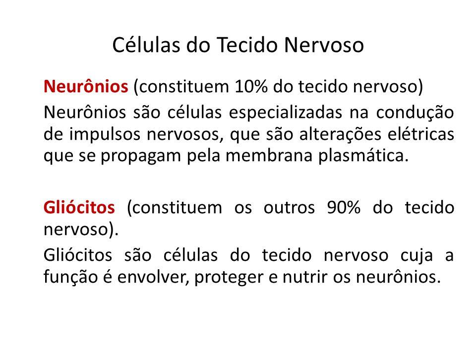 Células do Tecido Nervoso Neurônios (constituem 10% do tecido nervoso) Neurônios são células especializadas na condução de impulsos nervosos, que são