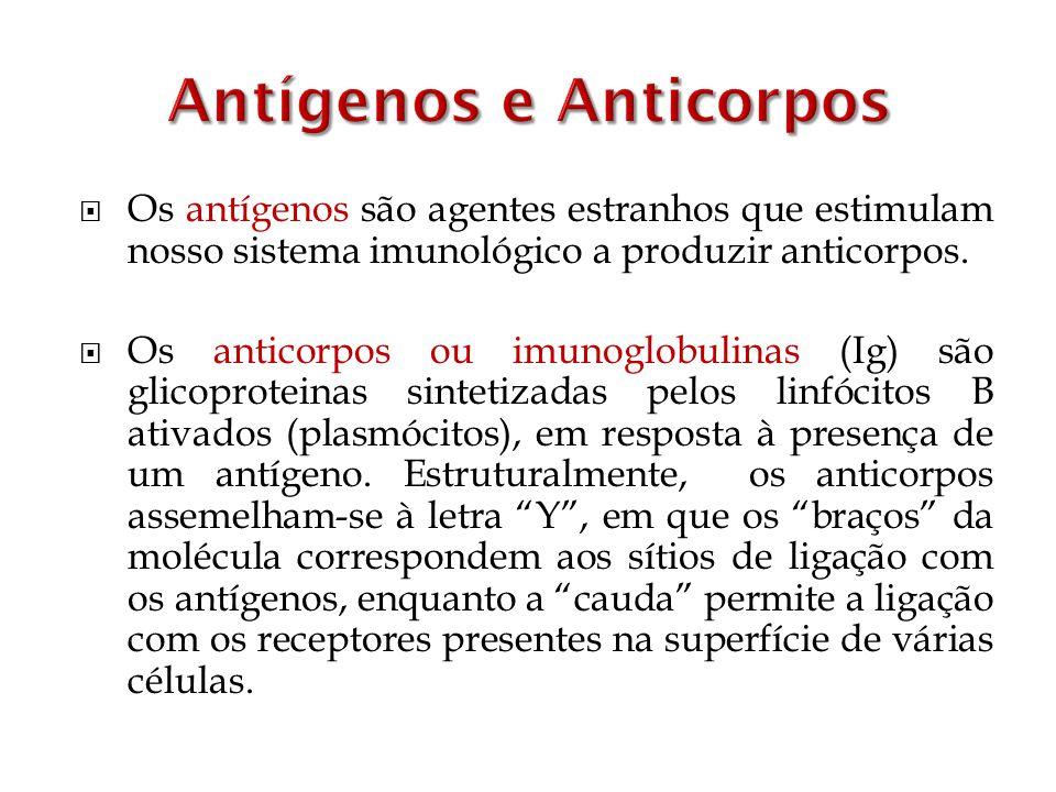 Os antígenos são agentes estranhos que estimulam nosso sistema imunológico a produzir anticorpos. Os anticorpos ou imunoglobulinas (Ig) são glicoprote