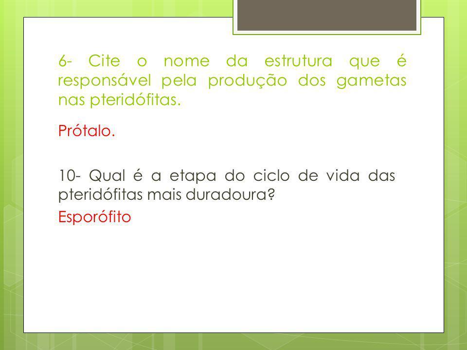 6- Cite o nome da estrutura que é responsável pela produção dos gametas nas pteridófitas.