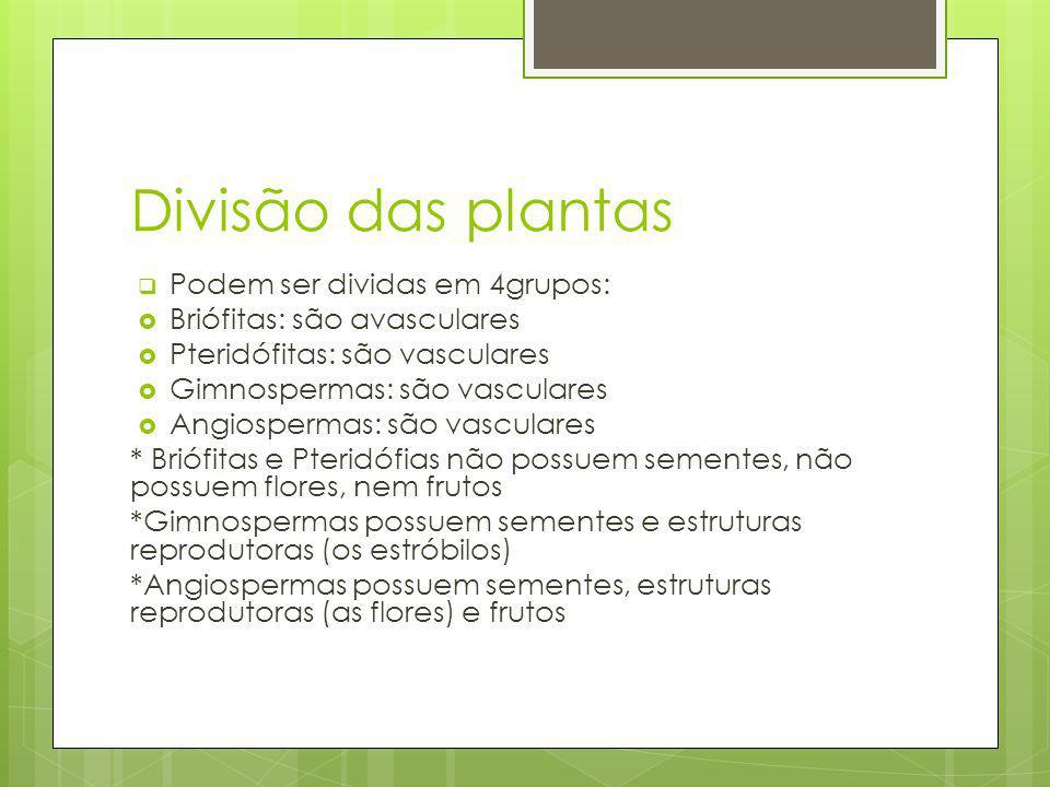 Divisão das plantas Podem ser dividas em 4grupos: Briófitas: são avasculares Pteridófitas: são vasculares Gimnospermas: são vasculares Angiospermas: são vasculares * Briófitas e Pteridófias não possuem sementes, não possuem flores, nem frutos *Gimnospermas possuem sementes e estruturas reprodutoras (os estróbilos) *Angiospermas possuem sementes, estruturas reprodutoras (as flores) e frutos
