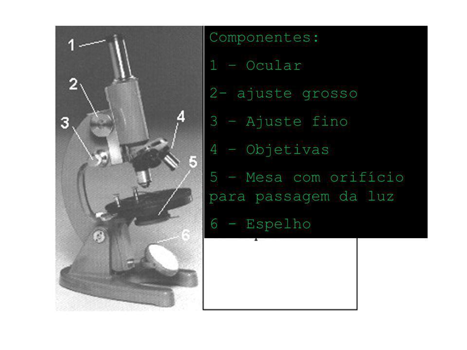 Componentes: 1 – Ocular 2- ajuste grosso 3 – Ajuste fino 4 – Objetivas 5 – Mesa com orifício para passagem da luz 6 - Espelho
