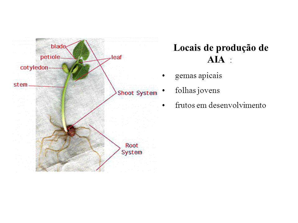 Locais de produção de AIA : gemas apicais folhas jovens frutos em desenvolvimento