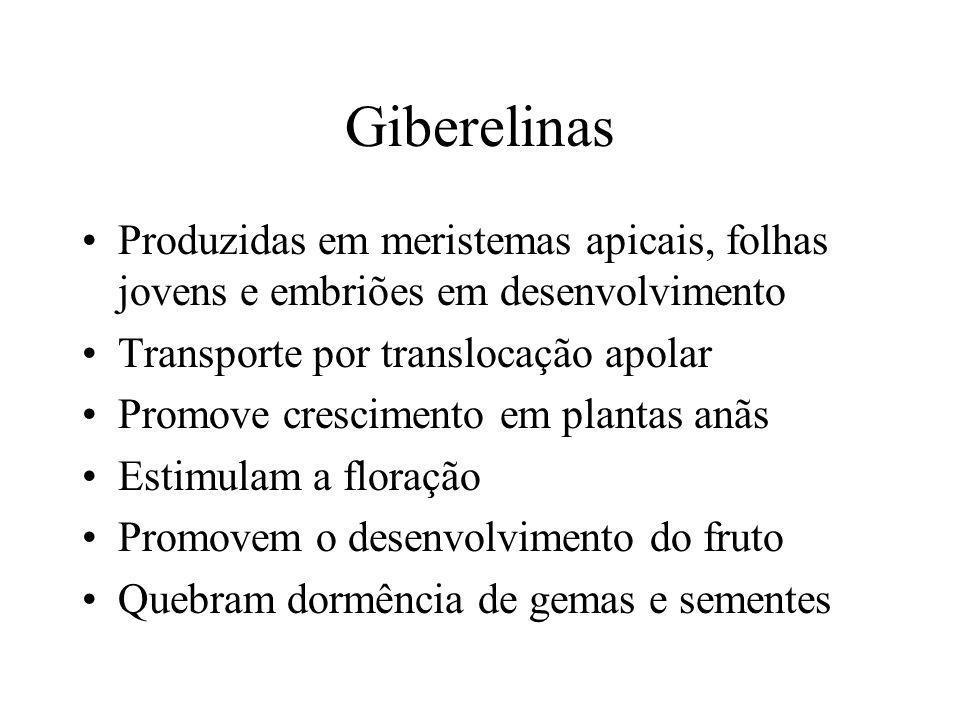 Giberelinas Produzidas em meristemas apicais, folhas jovens e embriões em desenvolvimento Transporte por translocação apolar Promove crescimento em pl