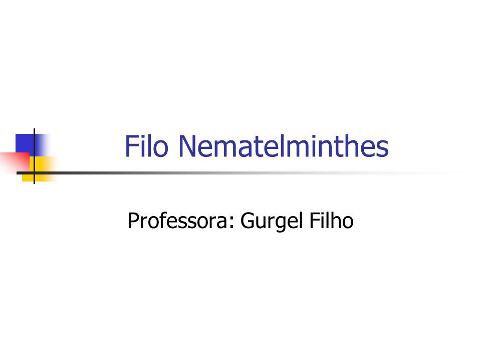 Filo Nematelminthes Professora: Gurgel Filho