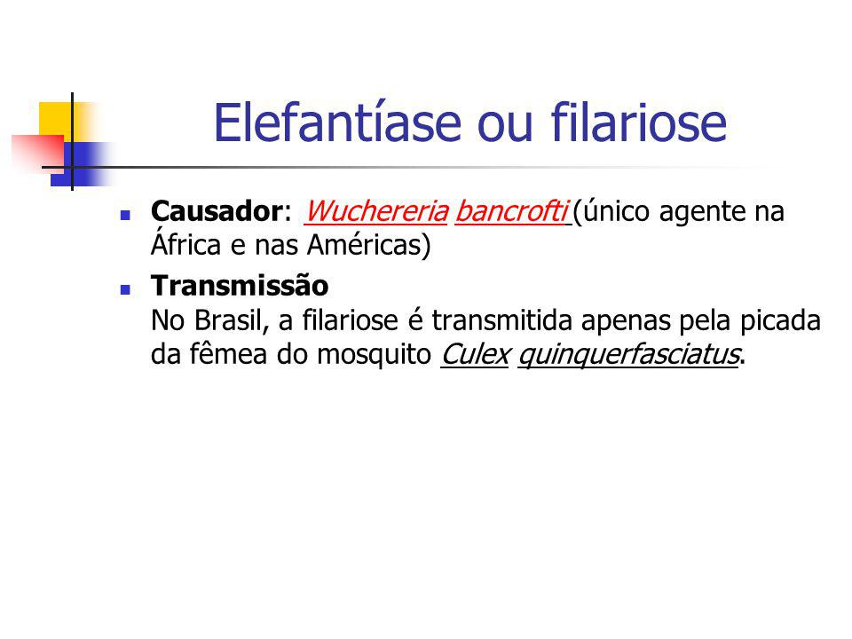 Causador: Wuchereria bancrofti (único agente na África e nas Américas) Transmissão No Brasil, a filariose é transmitida apenas pela picada da fêmea do
