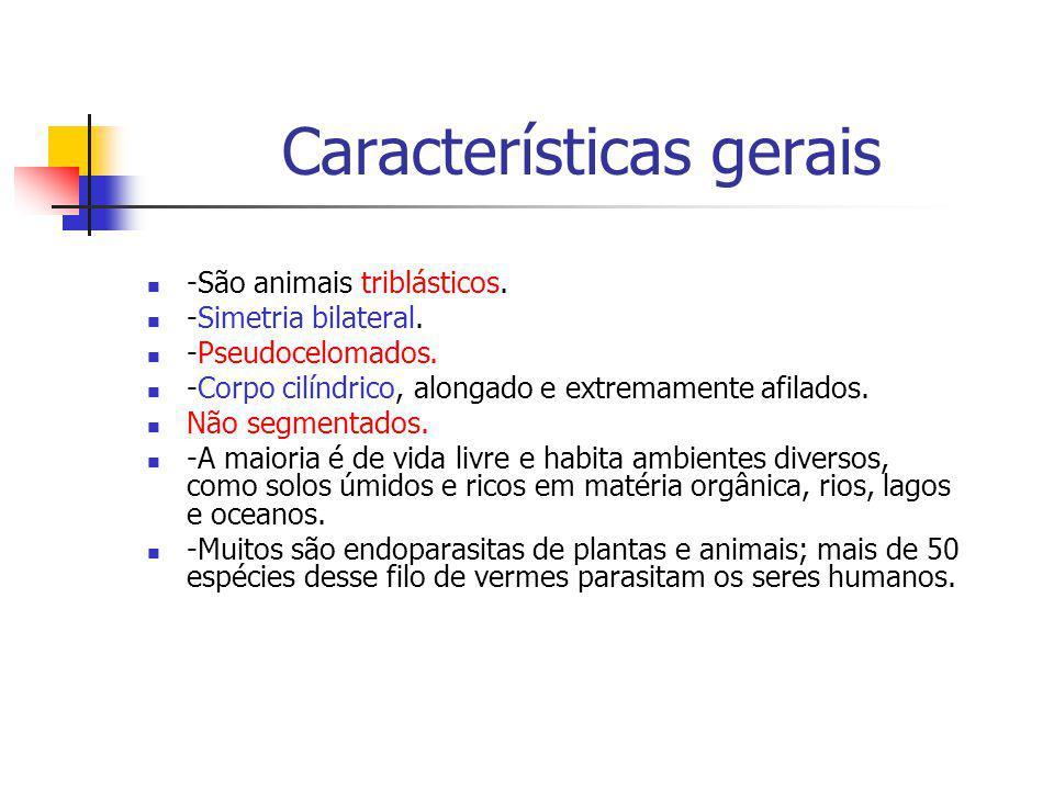 Características gerais -São animais triblásticos. -Simetria bilateral. -Pseudocelomados. -Corpo cilíndrico, alongado e extremamente afilados. Não segm