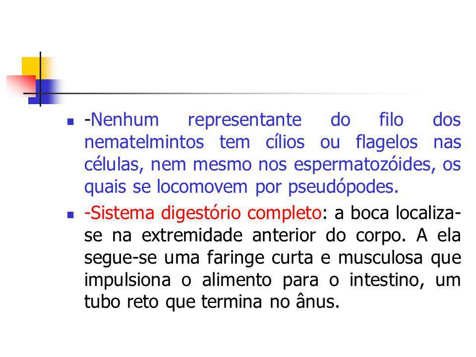 -Nenhum representante do filo dos nematelmintos tem cílios ou flagelos nas células, nem mesmo nos espermatozóides, os quais se locomovem por pseudópod