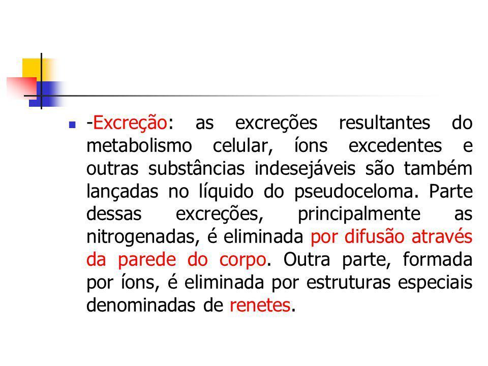 -Excreção: as excreções resultantes do metabolismo celular, íons excedentes e outras substâncias indesejáveis são também lançadas no líquido do pseudo