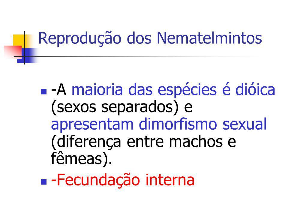 Reprodução dos Nematelmintos -A maioria das espécies é dióica (sexos separados) e apresentam dimorfismo sexual (diferença entre machos e fêmeas). -Fec