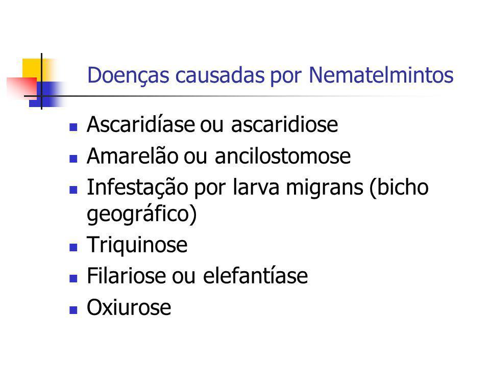 Doenças causadas por Nematelmintos Ascaridíase ou ascaridiose Amarelão ou ancilostomose Infestação por larva migrans (bicho geográfico) Triquinose Fil