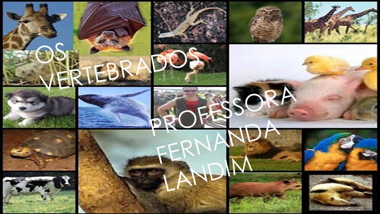 Os vertebrados são representados pelos peixes, anfíbios, répteis, aves e mamíferos.