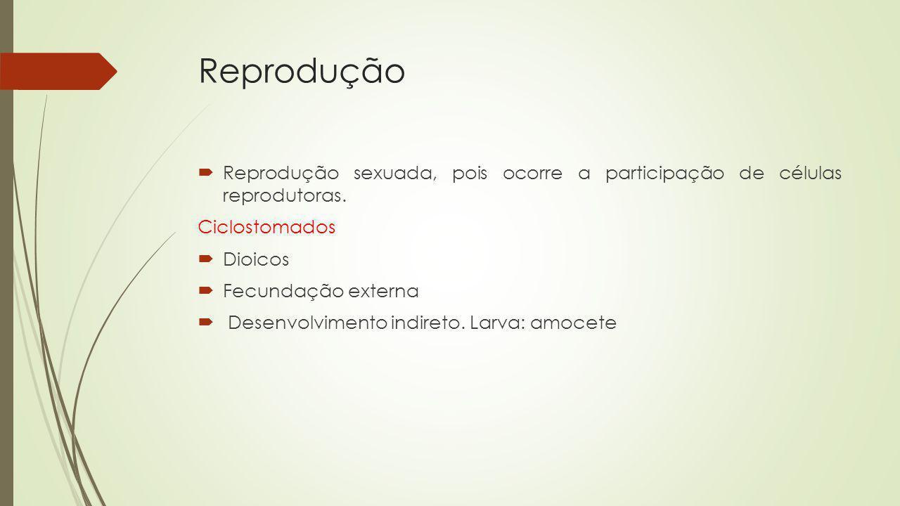 Reprodução Reprodução sexuada, pois ocorre a participação de células reprodutoras. Ciclostomados Dioicos Fecundação externa Desenvolvimento indireto.