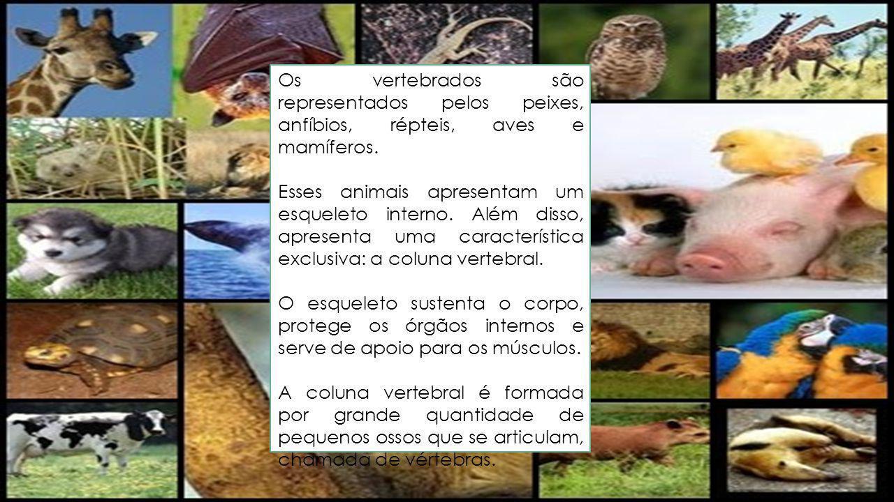 Os vertebrados são representados pelos peixes, anfíbios, répteis, aves e mamíferos. Esses animais apresentam um esqueleto interno. Além disso, apresen