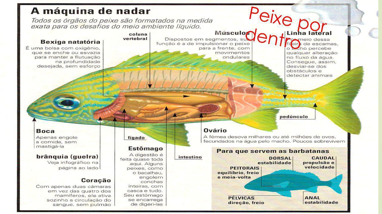 Órgãos sensoriais Visão - não possuem pálpebras, o sentido da visão é bastante limitado.