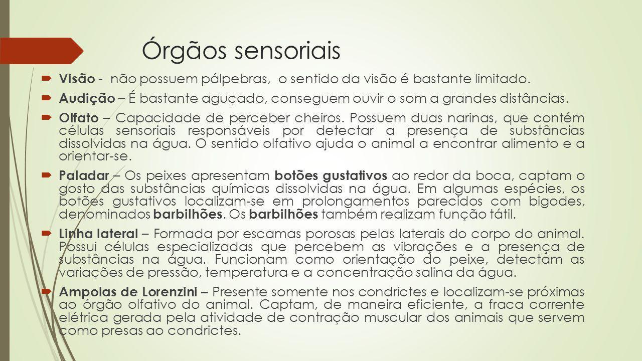 Órgãos sensoriais Visão - não possuem pálpebras, o sentido da visão é bastante limitado. Audição – É bastante aguçado, conseguem ouvir o som a grandes