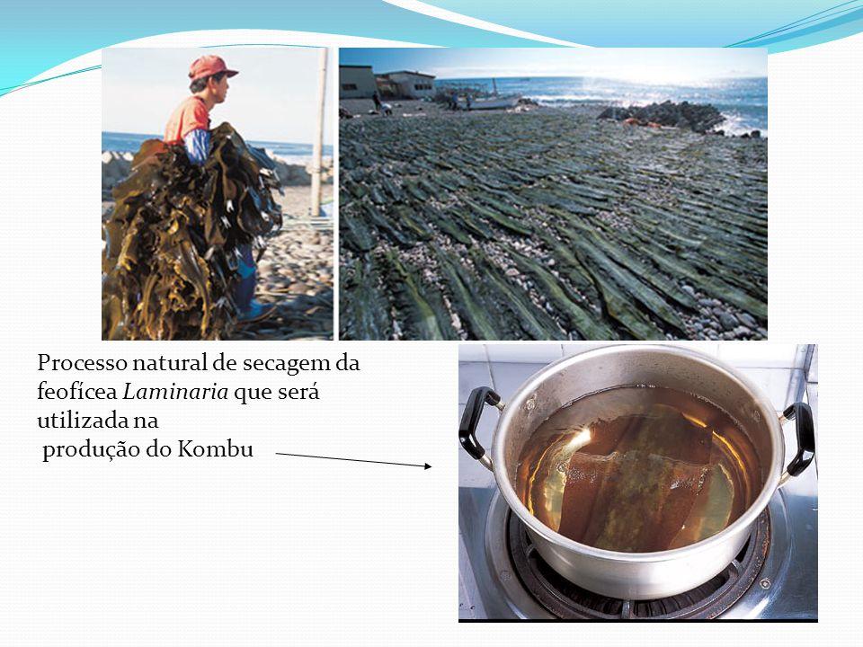Processo natural de secagem da feofícea Laminaria que será utilizada na produção do Kombu