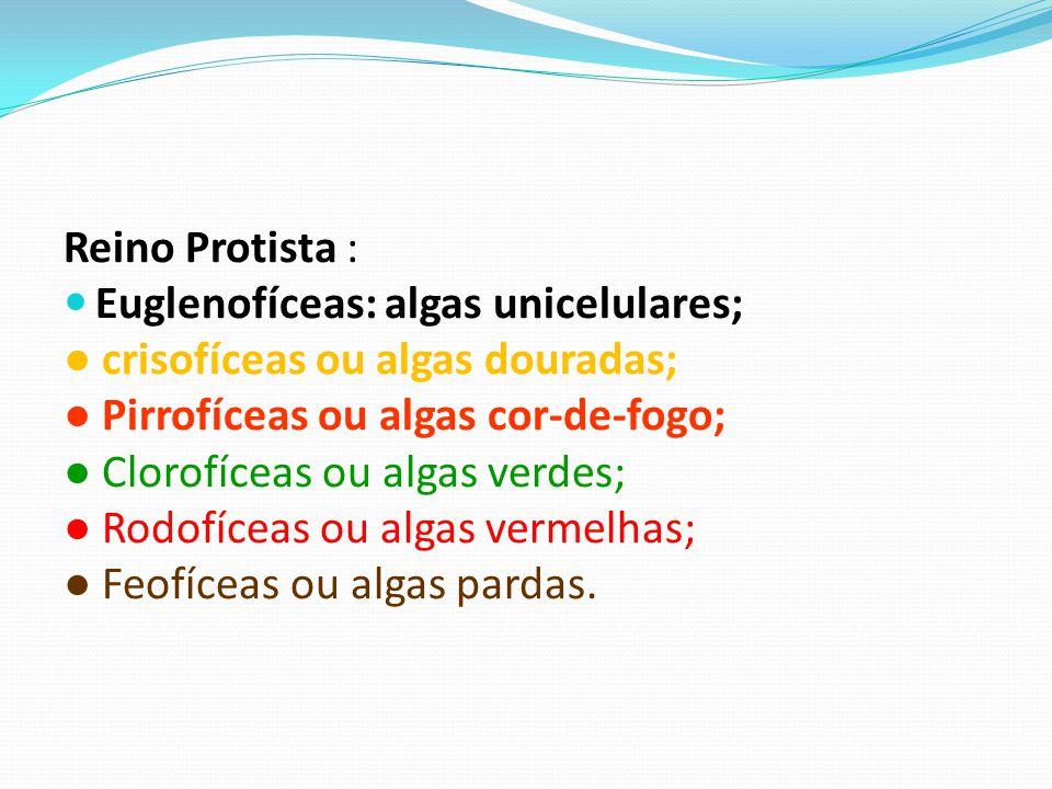 Reino Protista : Euglenofíceas: algas unicelulares; crisofíceas ou algas douradas; Pirrofíceas ou algas cor-de-fogo; Clorofíceas ou algas verdes; Rodofíceas ou algas vermelhas; Feofíceas ou algas pardas.