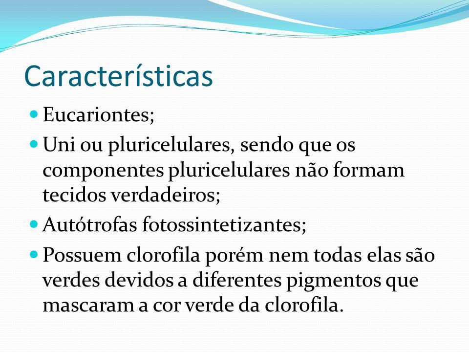 Características Eucariontes; Uni ou pluricelulares, sendo que os componentes pluricelulares não formam tecidos verdadeiros; Autótrofas fotossintetizan