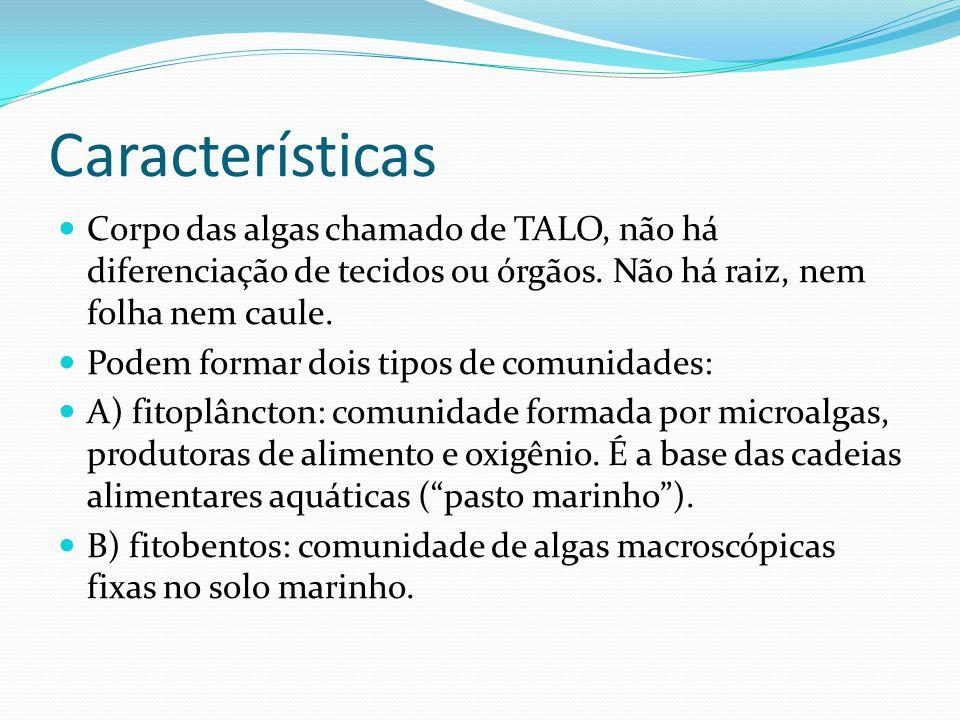 Características Corpo das algas chamado de TALO, não há diferenciação de tecidos ou órgãos. Não há raiz, nem folha nem caule. Podem formar dois tipos