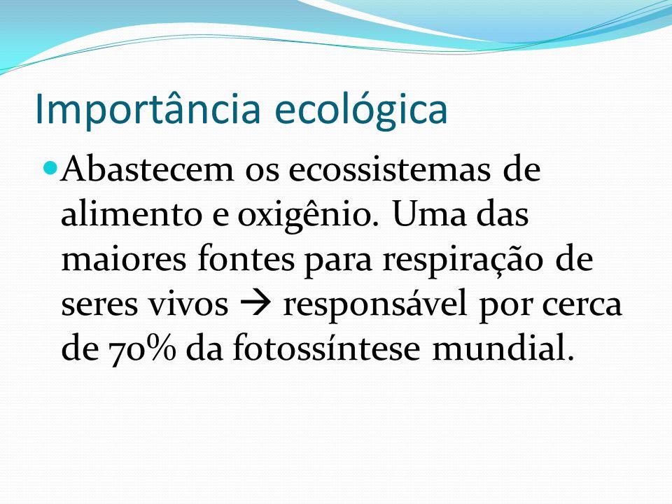 Importância ecológica Abastecem os ecossistemas de alimento e oxigênio. Uma das maiores fontes para respiração de seres vivos responsável por cerca de