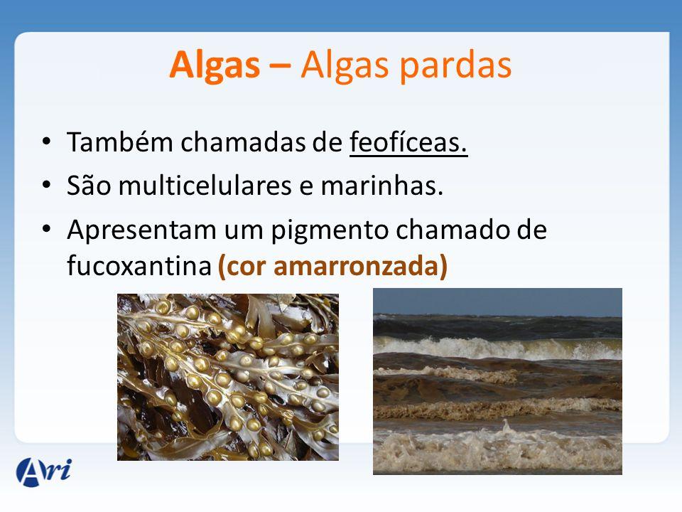 Algas – Algas pardas Também chamadas de feofíceas. São multicelulares e marinhas. Apresentam um pigmento chamado de fucoxantina (cor amarronzada)
