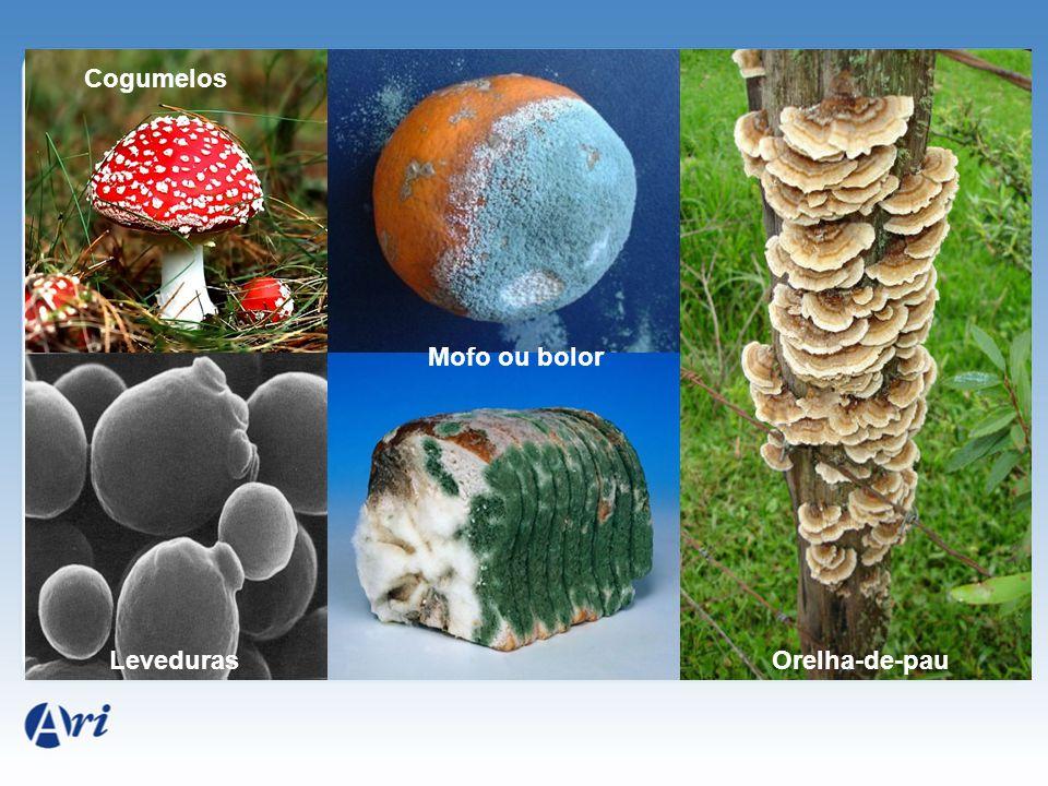 Cogumelos Mofo ou bolor Orelha-de-pauLeveduras