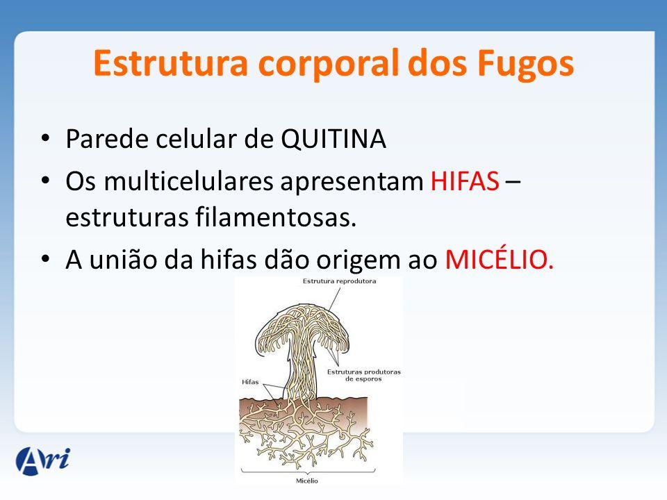 Estrutura corporal dos Fugos Parede celular de QUITINA Os multicelulares apresentam HIFAS – estruturas filamentosas. A união da hifas dão origem ao MI