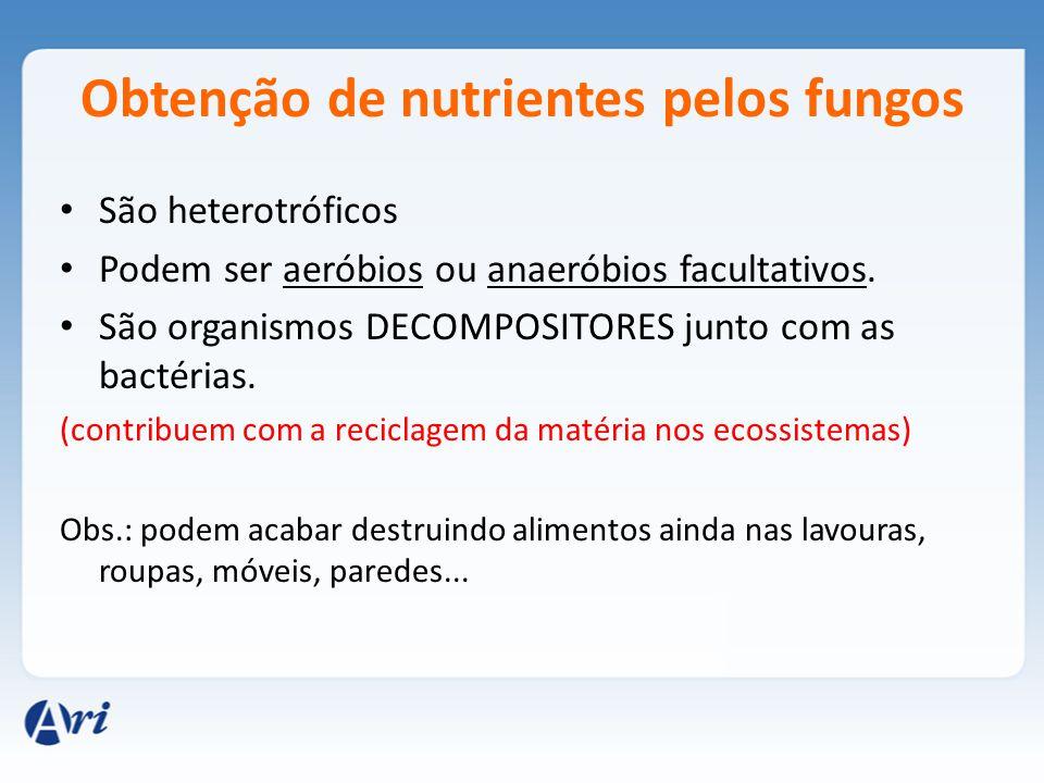 Obtenção de nutrientes pelos fungos São heterotróficos Podem ser aeróbios ou anaeróbios facultativos. São organismos DECOMPOSITORES junto com as bacté