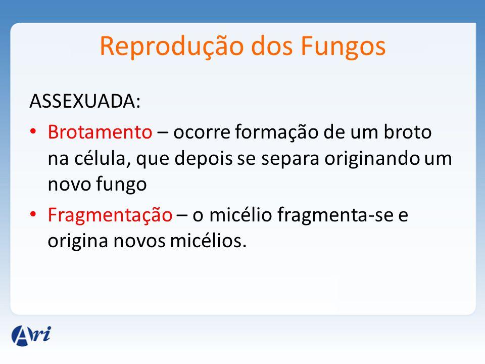 Reprodução dos Fungos ASSEXUADA: Brotamento – ocorre formação de um broto na célula, que depois se separa originando um novo fungo Fragmentação – o micélio fragmenta-se e origina novos micélios.